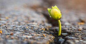Resiliência, imagem ilustrativa de semente germinando